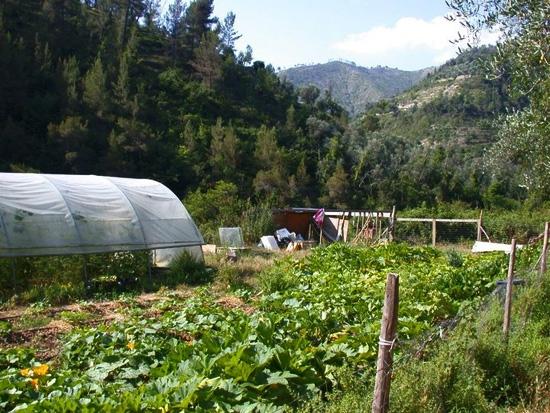sem2011-torri-garden4